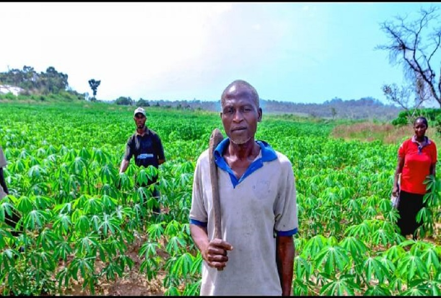 Nigerian farmers to receive improved seeds